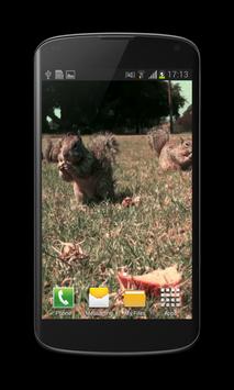 Little Squirrel 3D Wallpaper screenshot 3