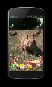 Little Squirrel 3D Wallpaper apk screenshot
