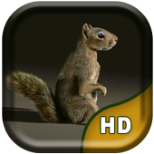 3D Squirrel Live Wallpaper icon