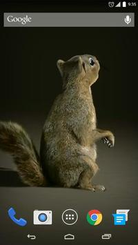 3D Squirrel Live Wallpaper apk screenshot
