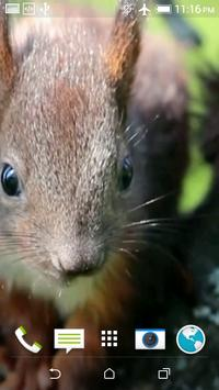 Squirrel Video Wallpaper apk screenshot