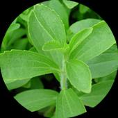 Stevia ☘ icon