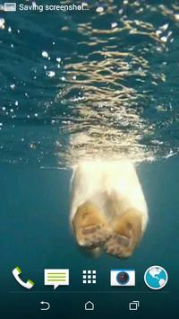 Polar Bear Swims Video LWP apk screenshot