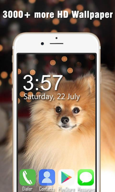 Pomeranian Live Wallpapers Hd For Android Apk Download