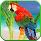 Parrots From Rio Wallpaper icon