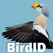 BirdID - European bird guide and quiz biểu tượng