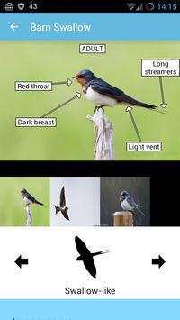 BirdID - European bird guide and quiz ảnh chụp màn hình 2