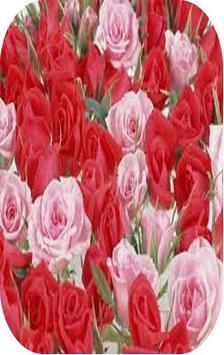 Beautiful Rose Wallpaper poster