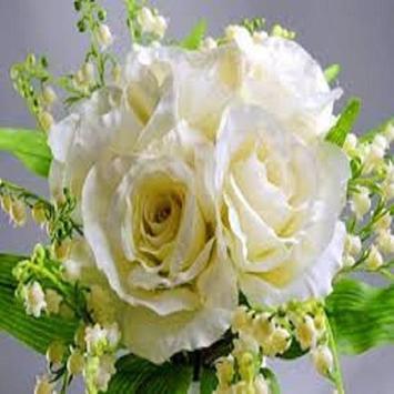 Beautiful Rose Wallpaper apk screenshot