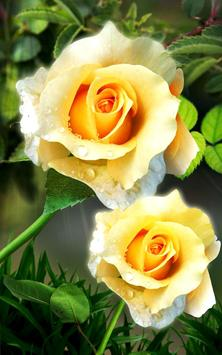 Rose. Magic Touch Flowers screenshot 12
