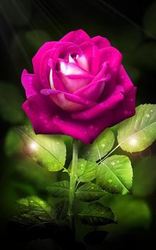 Rose. Magic Touch Flowers screenshot 5