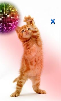 Talking, Dancing Cat. screenshot 5