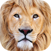 Zoo Animals : Game for Kids icon