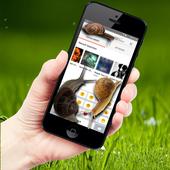 Snail in Phone best joke icon