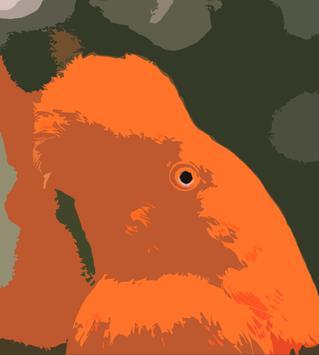 Birds Sounds of Peru ~ Sboard.pro poster
