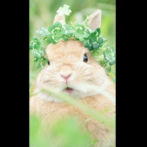 Cute Rabbit Wallpaper Hd For Android Apk Download