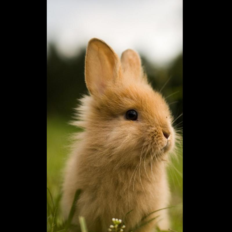 ... Cute Rabbit Wallpaper HD screenshot 2 ...