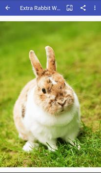 rabbit wallpapers apk screenshot
