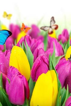 Colorful Tulips Live Wallpaper screenshot 3