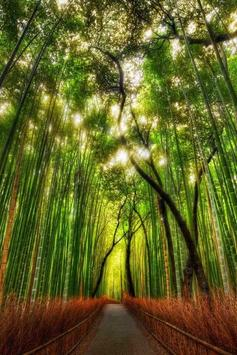 Bamboo Forest Live Wallpaper poster