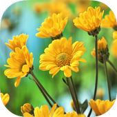 Flowers Live Wallpaper иконка