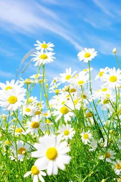Spring Flowers Live Wallpaper poster