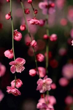 Spring Flowers Live Wallpaper screenshot 2