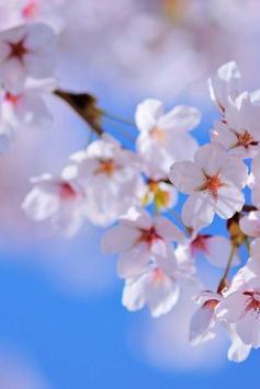 Spring Flowers Live Wallpaper apk screenshot