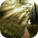Sunny Forest Live Wallpaper APK