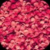 Petals Live Wallpaper Zeichen