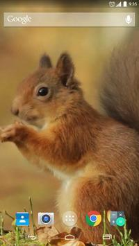 Red Squirrel Live Wallpaper poster