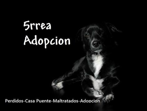 5rrea Adopcion poster