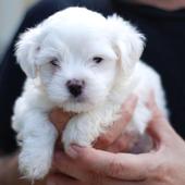 Puppies Wallpaper icon