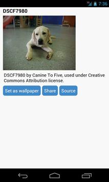 Puppies Wallpaper apk screenshot