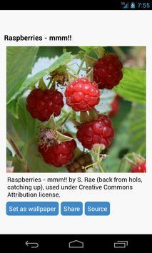 Raspberries Wallpapers apk screenshot