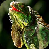 Iguana HD Wallpaper icon