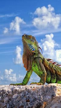 Iguana HD Wallpaper screenshot 3