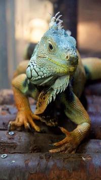 Iguana HD Wallpaper screenshot 1