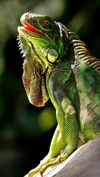 Iguana HD Wallpaper screenshot 2
