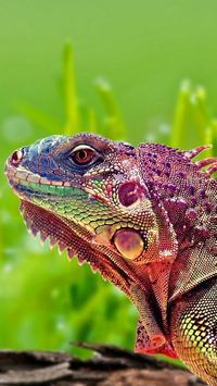 Iguana HD Wallpaper screenshot 4