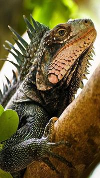 Iguana HD Wallpaper screenshot 5
