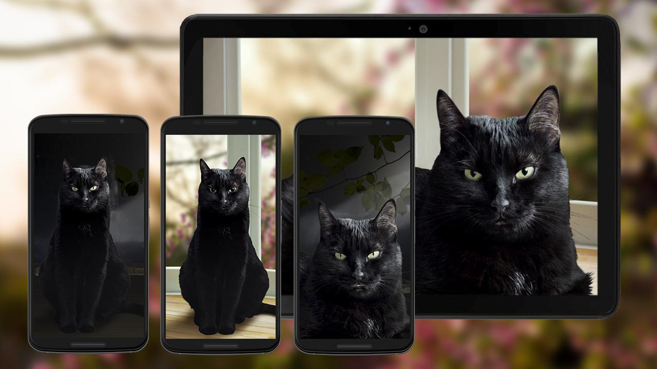 Kucing Hitam Lucu Wallpaper Hidup For Android APK Download