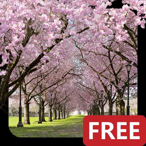 Spring Cherry Blossom Live Wallpaper FREE