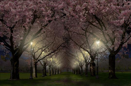 春の桜花の無料3D桜 春 の 桜 花 の 無 料 3D 桜 Cherry blossom FREE スクリーンショット 1