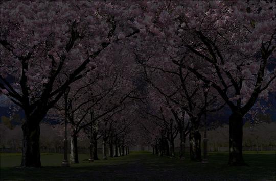 春の桜花の無料3D桜 春 の 桜 花 の 無 料 3D 桜 Cherry blossom FREE スクリーンショット 2