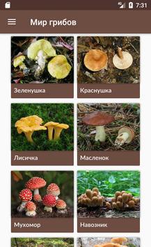 Мир грибов. Справочник poster