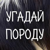 Собаки - угадай породу icon