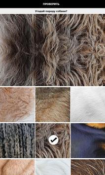 Собаки - угадай породу apk screenshot