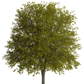 tree (faster browser) icon