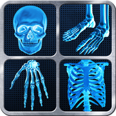 X-Ray Full Body Prank 아이콘